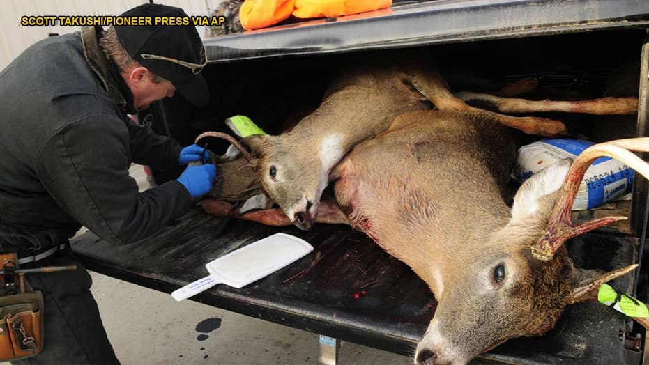 'Zombie deer' destined for Nevada invasion