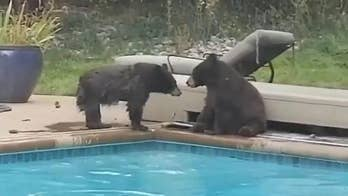 Bears have pool party before snowstorm