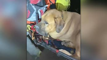 Injured mastiff rescued from Utah hiking trail