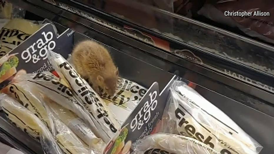 Caught on Video: Rat snacks on cheese in grocery store
