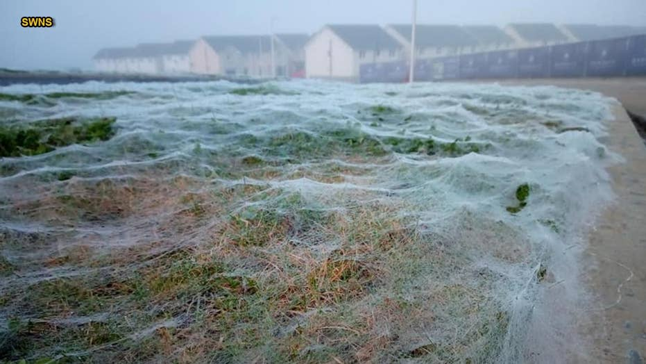 AMAZING PICS: Giant spiderweb confused for frost blankets road