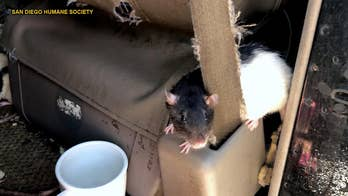 Hundreds of rodents found in van with woman in posh San Diego neighborhood