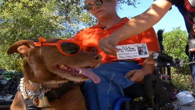 Disabled man asked to leave McDonalds over smelly service dog