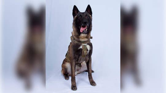 War dog hailed as hero for role in US operation that killed ISIS leader al-Baghdadi