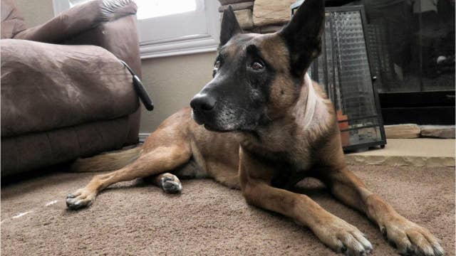 Hero dog to make a full recovery after getting stabbed in the neck