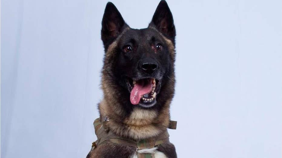 Trump identifies 'Conan,' military dog in Baghdadi raid, says she will visit White House