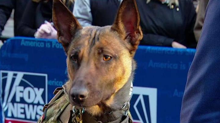 Meet a K-9 who has faced-off with ISIS fighters and served as a therapy dog for Iraqi children