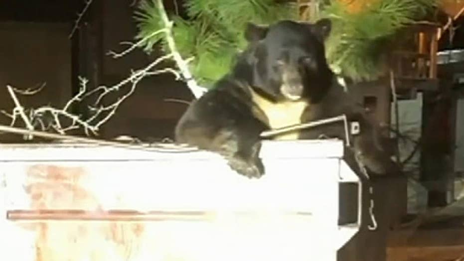 Deputies help free trapped bear from dumpster in California