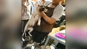 California dog store employee caught forcibly throwing dog by neck across room