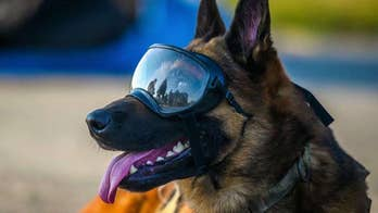 Medal ceremony honors military animals