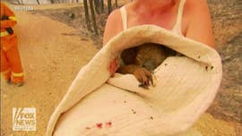 Koala rescued from flames of Australia wildfire, badly burned as blazes rage across country