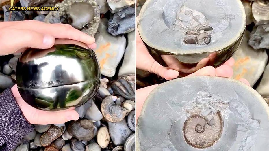 Amateur archaeologist finds 185M-year-old 'golden snitch' with extinct sea creature inside