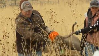 Mule deer airlifted in Utah for health checkup