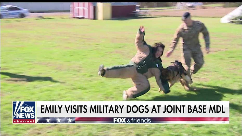 Emily Compagno visits military dogs at Joint Base MDL