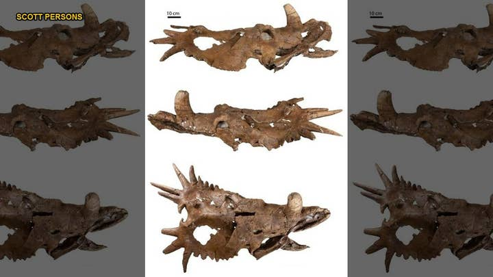 Paleontologists stunned as dinosaur skull discovery throws previous assumptions for a loop