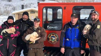 Adorable puppies rescued after being found on snowy mountain