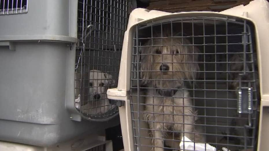Rescue dogs in stolen van reunited with owner in California