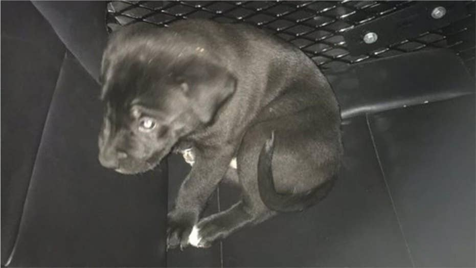 Police: Nearly naked Colorado man on meth for first time tossed puppy into car
