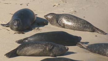 City sides with seals over surfers, closes beach