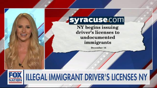 New York leadership offering undocumented immigrants drivers licenses are 'aiding and abetting illegal activity': Tomi Lahren