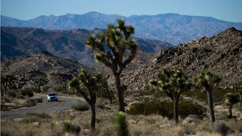 Human remains found inside Joshua Tree National Park
