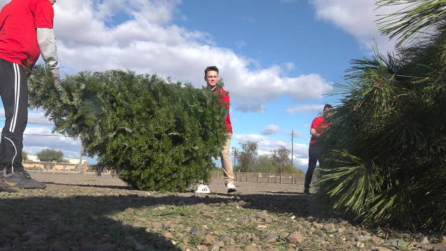 AZ College students run Christmas tree removal business