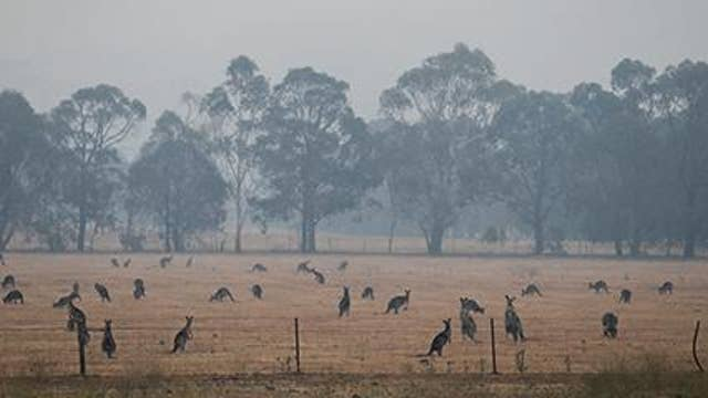 Sydney Wildlife Rescue fears wildfire implications could last for decades