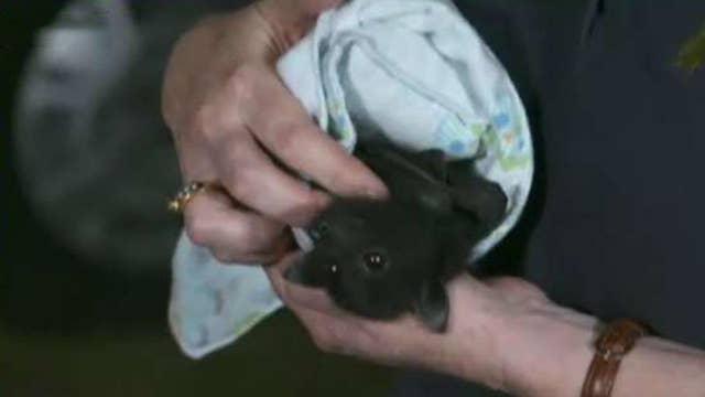 Rush to save wildlife impacted by Australia's bushfires