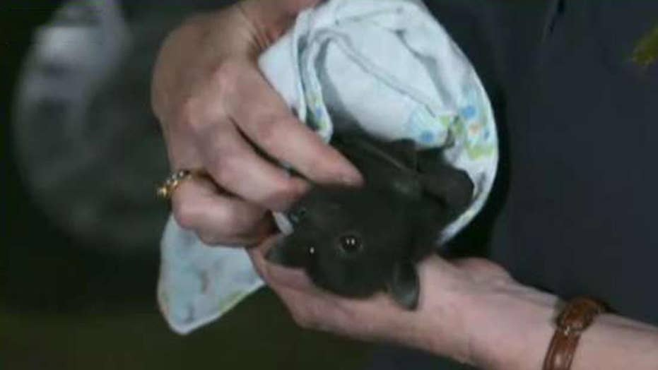 Rush to save wildlife impacted by Australia's bushfires