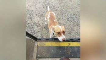 Eric Shawn: The UPS dog stars!
