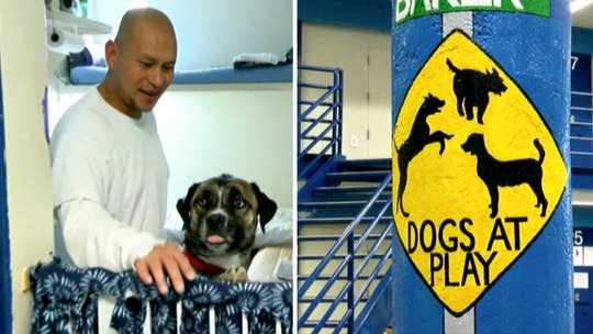 Nevada inmates train dogs to help veterans and first responders