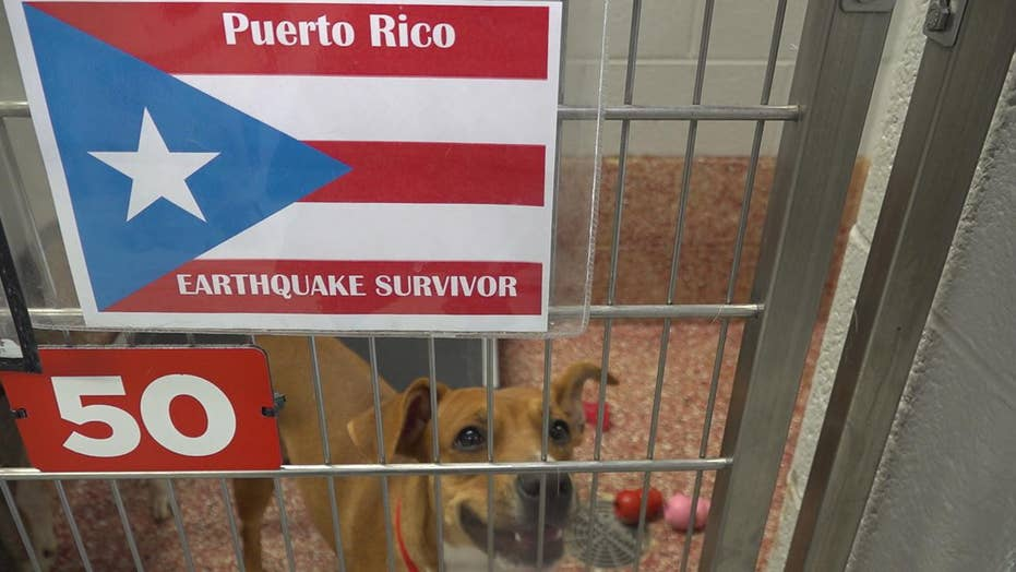 Rescued pets from earthquake-ravaged Puerto Rico end up at East Coast shelters