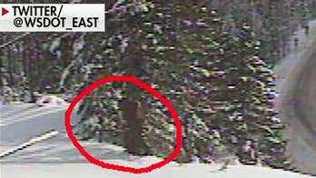 Bigfoot spotted on Washington State Department of Transportation webcam?