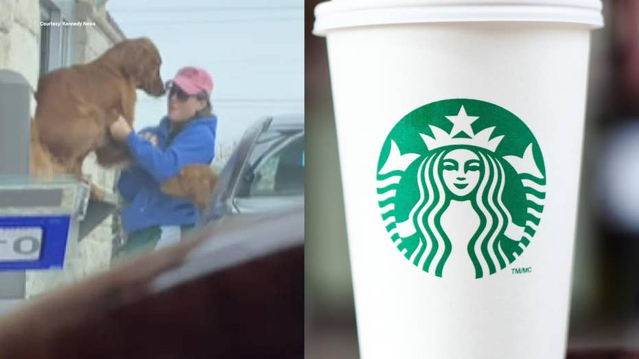 Dog can't wait for Starbucks Puppuccino, jumps out of car window at drive-thru