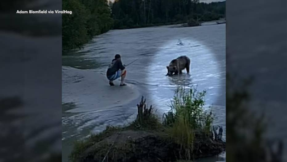 Bear steals fisherman's catch right off the line in wild video