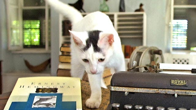 Cats at Hemingway museum at center of legal battle