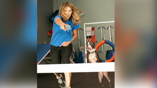 Not your average doggy training school