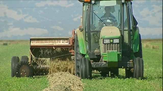Agriculture degrees the hot ticket for job growth?