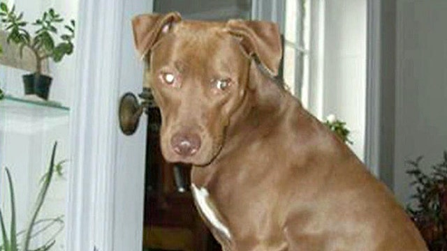 Help pets stranded by Sandy