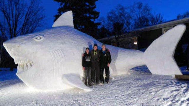 Brothers build 16-foot snow shark in parents' front yard
