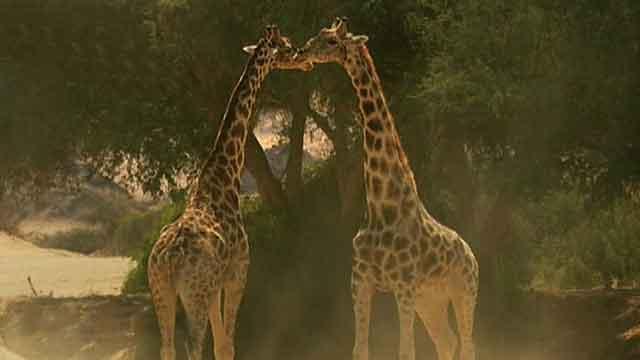 Documentary takes journey through Africa's diverse wildlife