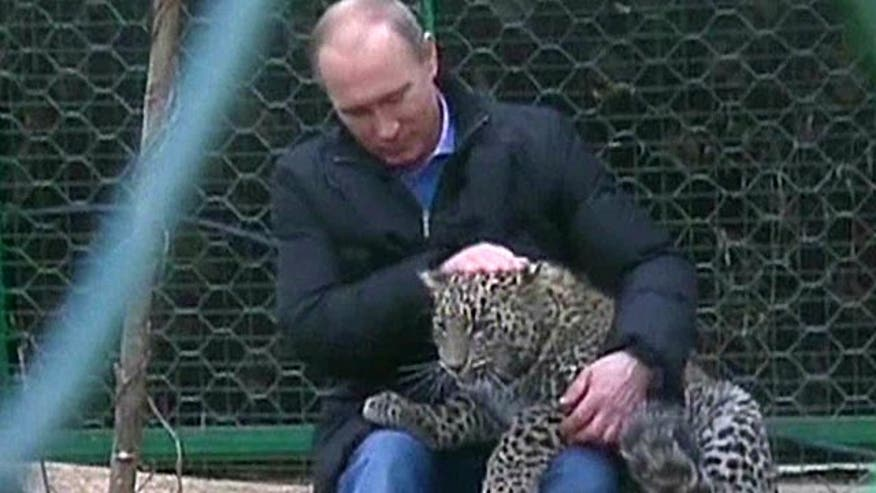 Russian leader has photo op at leopard preserve
