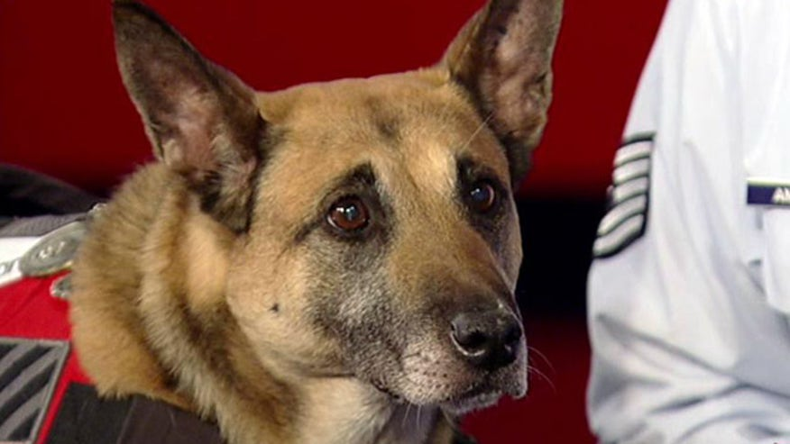 'Glory Hounds' puts spotlight on four-legged heroes