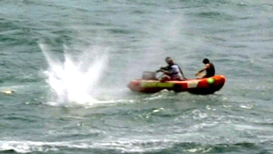 Sharks attack man off coast of New Zealand