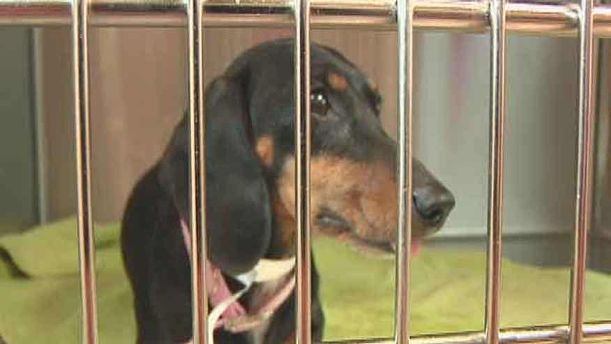 SC veterinarians say animal shelters are abusing public funds and performing procedures they are not authorized to do.