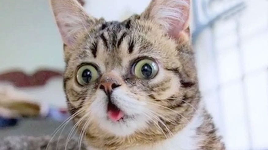 Lil Bub went from adorable kitten to Internet sensation to the star of the new documentary 'Lil Bub and Friendz'
