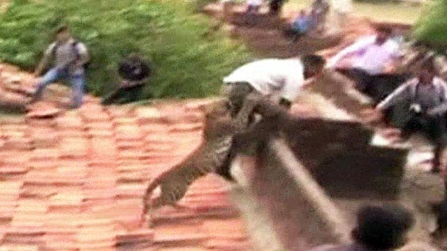 Leopard attacks villagers, causes panic