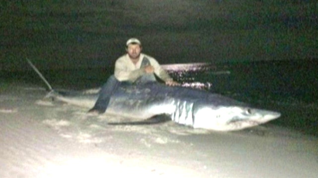 Catch of the day: Fisherman reels in 805-pound shark