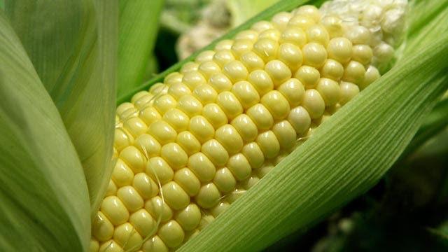 Gasoline greener than biofuels?