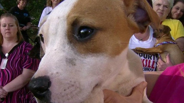 Paws for Faith and Hope: Rescuing shelter animals